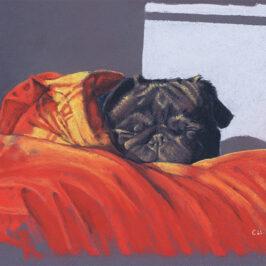 Snug Pug