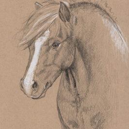 The Pleasant Pony